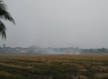 paddy field open burning